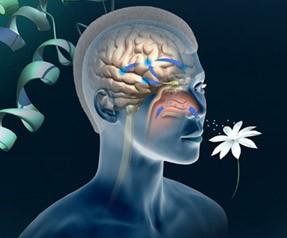 Запах — это усиливающий метод в рекламном бизнесе!